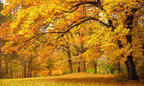 Желтый цвет толкование сонника