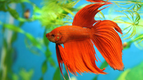 фото аквариума с рыбками