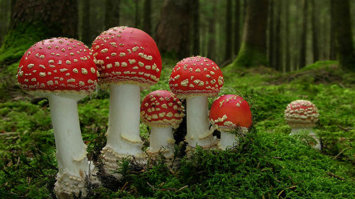 приснились грибы