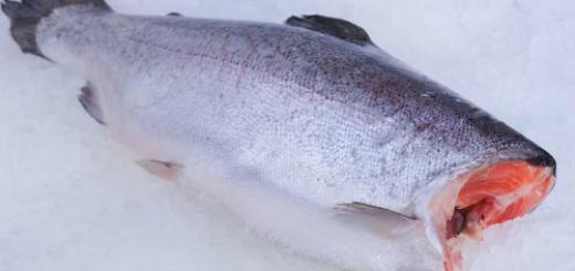сонник рыба без головы