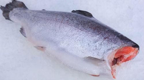 К чему снится живая рыба без головы фото