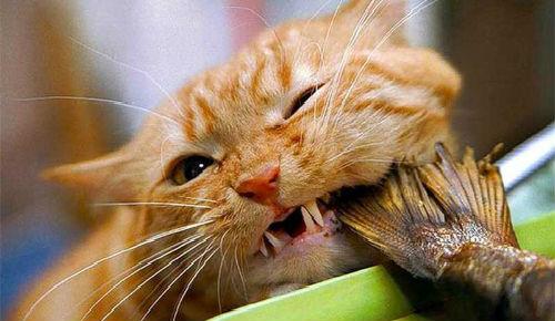 Приснился большой рыжий кот