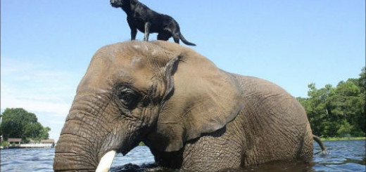 сонник слон