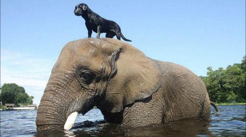 Сонник Толкование Снов Слон И