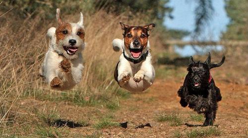 Сонник толкование приснились собаки фото