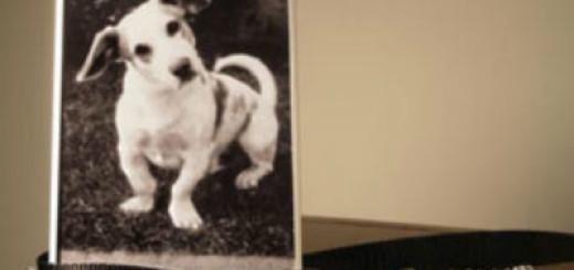 сонник собака умерла