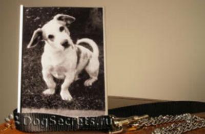 Сонник умерла собака фото