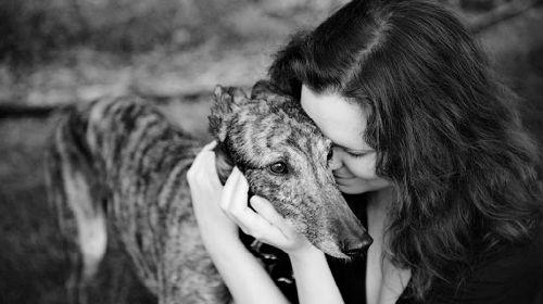 Умершая собака снится живой своему хозяину