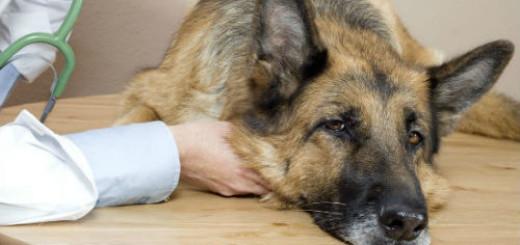 к чему снится больная собака