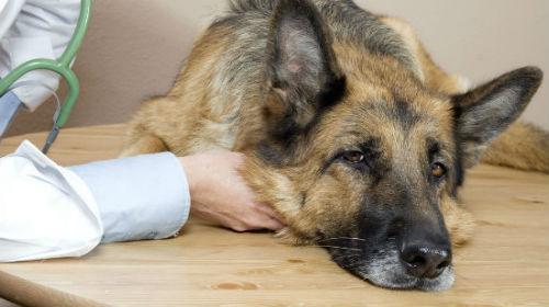 кишечные глисты у человека симптомы