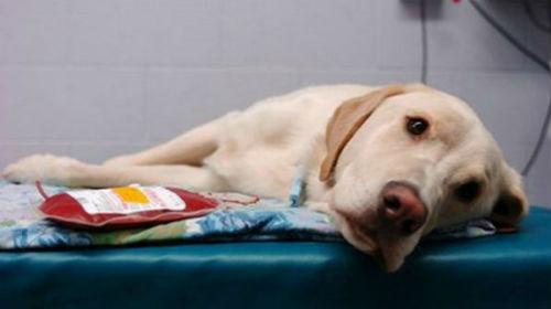 Фото Сонник больная собака