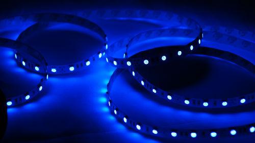 Сонник-синий цвет