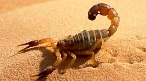 есть к чему сняться скорпионы для спортивной гимнастики