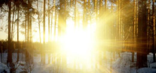 сонник солнечный свет