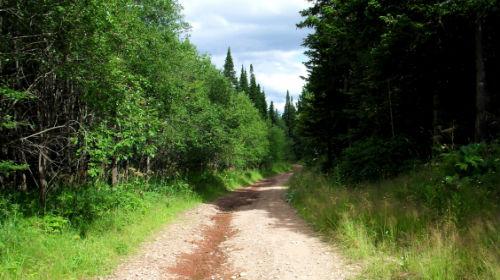 к чему снится идти по лесной дороге