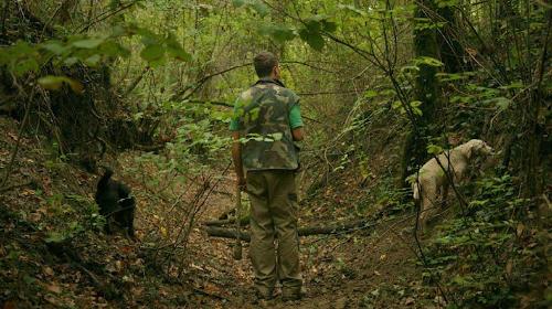 идти по лесу