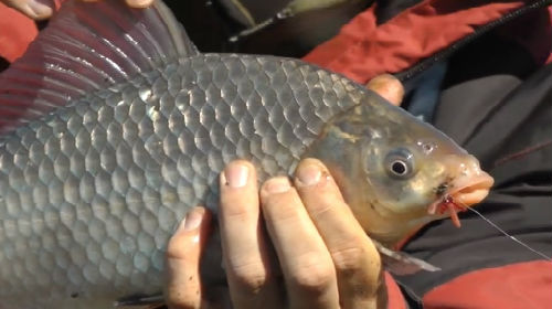 вместо рыбы дать удочку а не рыбу