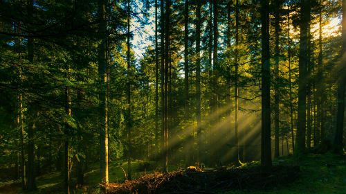 К чему снится лес. Сонник лес во сне