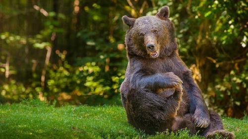 лес и медведь