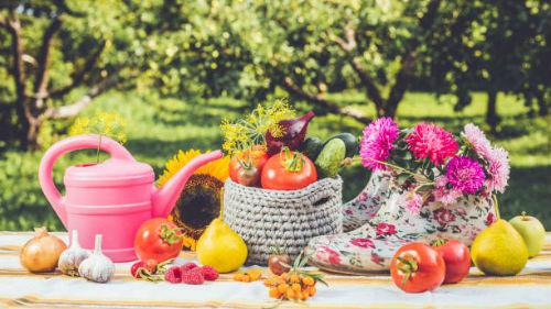 лунный посевной календарь огородника сентябрь 2019