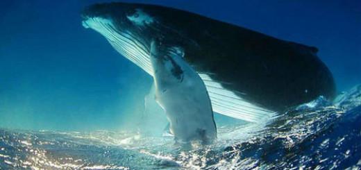 сонник кит
