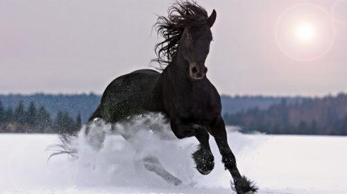 Сонник Лошадь приснилась к чему снится Лошадь во сне видеть
