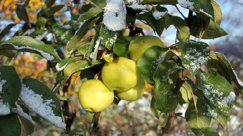 октябрь сезонные работы в саду и огороде