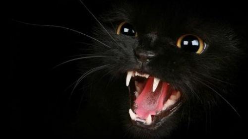 к чему снится как черная кошка нападает