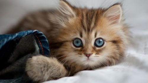 К чему снятся котята много маленьких женщине