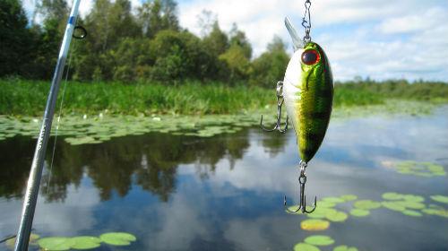 К чему снится отпустить пойманную рыбу