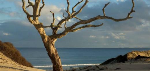 сухое дерево во сне