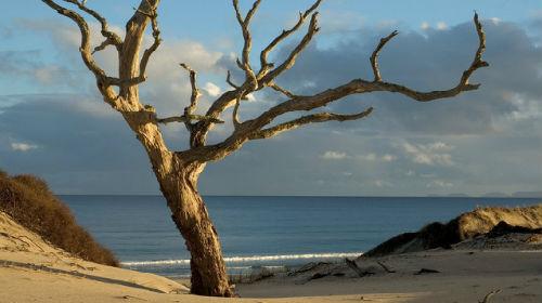 Сухое рубить дерево сонник