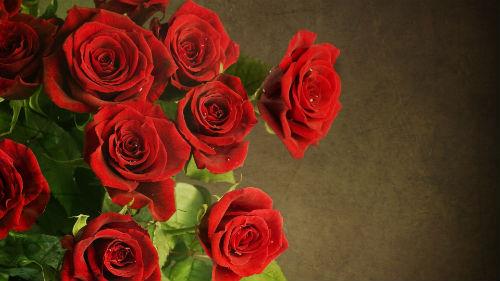 Видеть красные цветы во сне