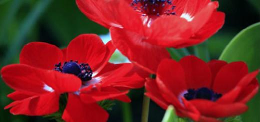 красные цветы во сне