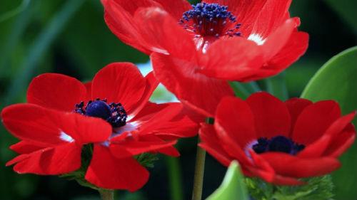 Есть во сне синие цветы