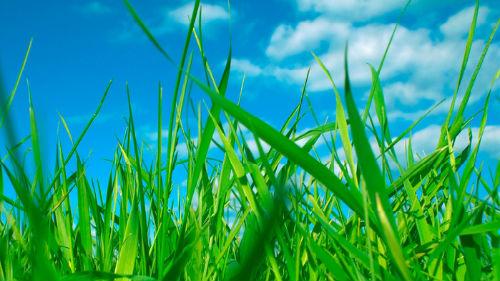 Сонник зеленая трава во сне к чему снится зеленая трава