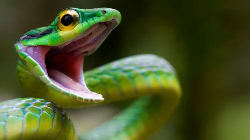 Сонник зеленая змея во сне к чему снится зеленая змея