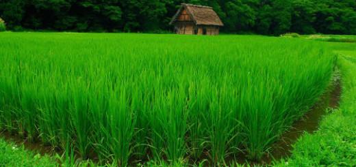 зелень во сне