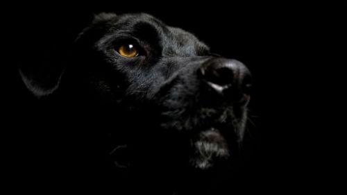 кусает черная собака