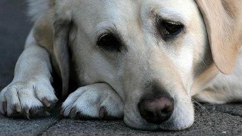 Фото Сонник потерять собаку и искать