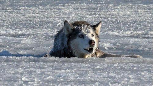 К чему снится упасть под лед фото
