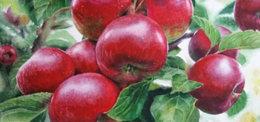 яблоки на дереве во сне