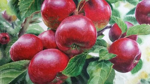 Сон яблоки на дереве