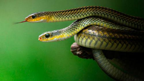 Сонник маленькие змеи во сне к чему снятся маленькие змеи