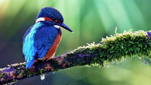 к чему снится красивая птичка женщине