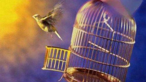 птица вылетела из клетки