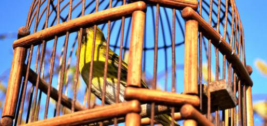 птица в клетке во сне