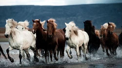 к чему снятся табун черных лошадей