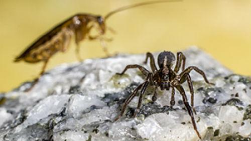 пауки тараканы
