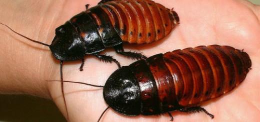 тараканы живые во сне